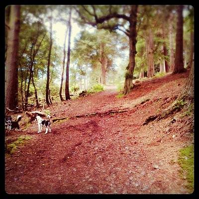 Woodland Photograph - Forest Walk #nature #forest #trees by Cara Hitchener