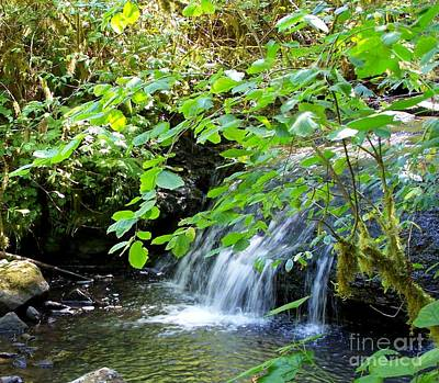Photograph - Forest Waterfall by Erica Hanel