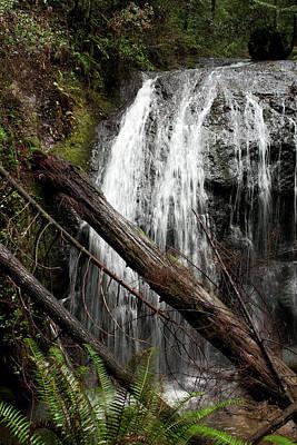 Photograph - Forest Waterfall by Lorraine Devon Wilke