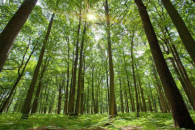Scenic View In France Photograph - Forest With Sun Behind by Sylvain Sonnet