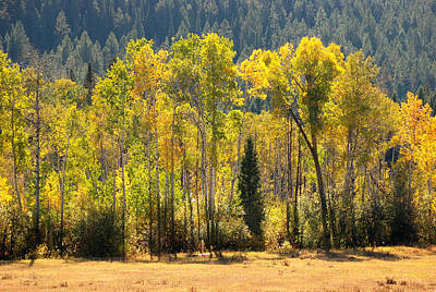 Photograph - Forested Light by Eric Tressler