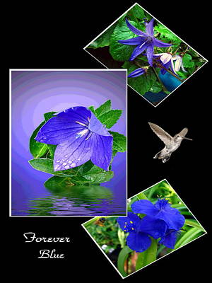 Photograph - Forever Blue Collage by Joyce Dickens