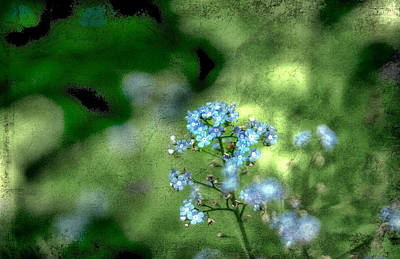 Forget-me-not Grunge Art Print by Darren Fisher