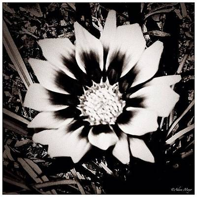 Iphone 4 Photograph - Formal Flower - Tuxed And Ready To Take by Photography By Boopero