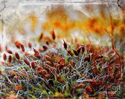 Forrest Of Moss Art Print