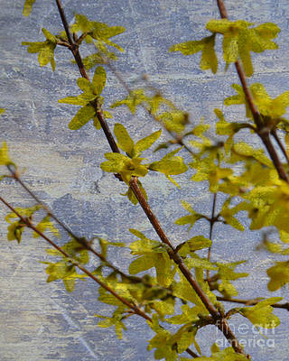 Photograph - Forsythia Vintage by Traci Cottingham