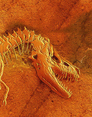 Tarbosaurus Photograph - Fossil Of Tarbosaurus Bataar, Head & Neck by Mehau Kulyk