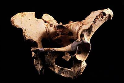 Fossilised Pelvis, Sima De Los Huesos Art Print by Javier Truebamsf