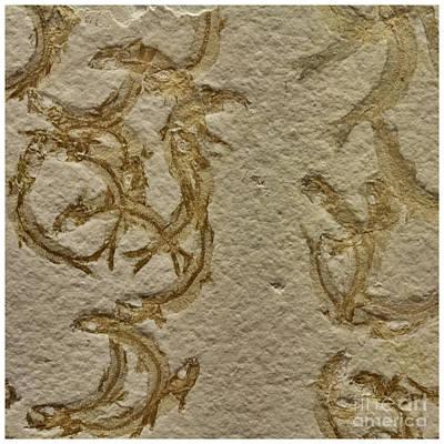 Decorative Fossil Photograph - Fossils - Leptolepides Sprattiformis by Heiko Koehrer-Wagner