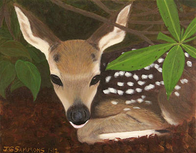 Found A Fawn Art Print by Janet Greer Sammons