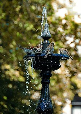 Photograph - Fountain Bathing by JAMART Photography