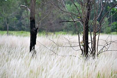Photograph - Fountain Grass by Ku Azhar Ku Saud