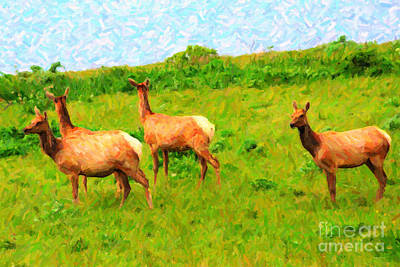 Four Elks Print by Wingsdomain Art and Photography