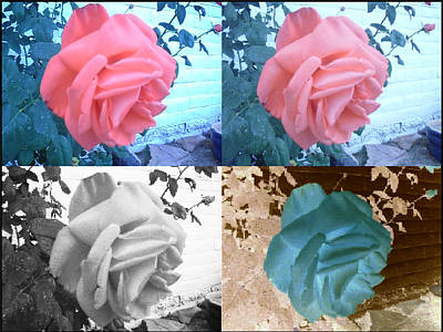 Four One Rose Art Print
