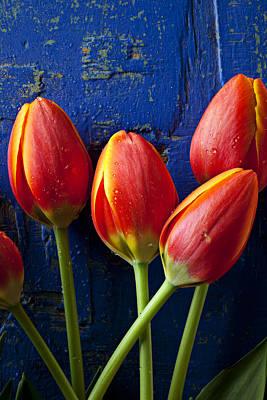 Orange Tulip Photograph - Four Orange Tulips by Garry Gay