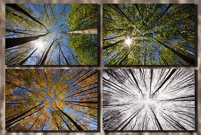 Four Seasons Forest Art Print