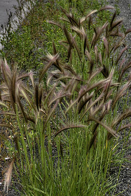 Fox Tail Grass Art Print by Grover Woessner