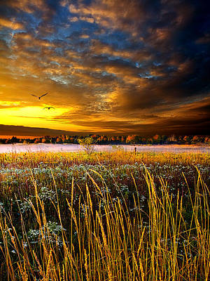 Foxfire Suite Print by Phil Koch