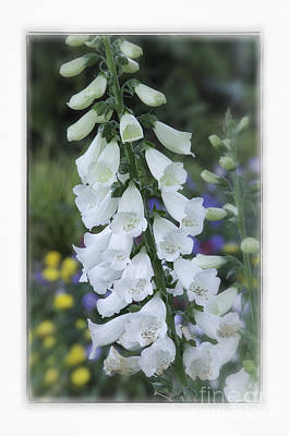Photograph - Foxglove II by David Waldrop