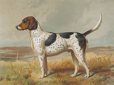 Domestic Animals Digital Art - Foxhound by Henry Guttmann