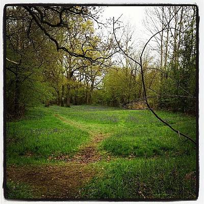 Woodland Wall Art - Photograph - Foxley Wood by Oliver Smith