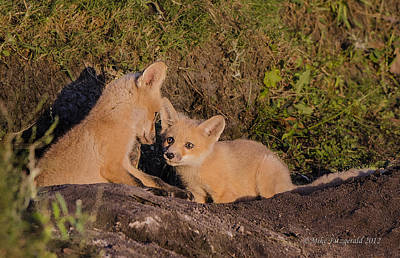 Photograph - Foxy Talk by Mike Fitzgerald