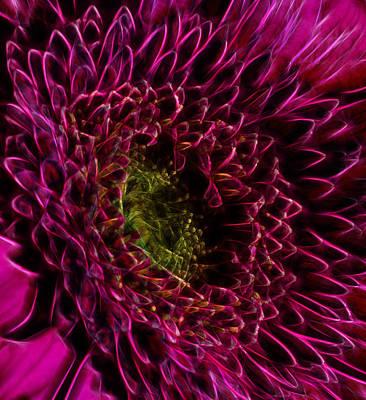 Gerber Daisy Photograph - Fractal Daisy Heart by Bill Tiepelman