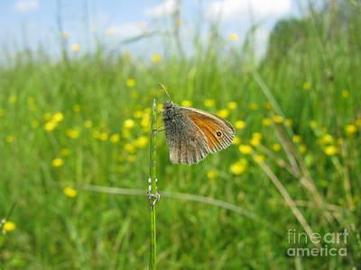 Photograph - Fragile Beauty #02 by Ausra Huntington nee Paulauskaite