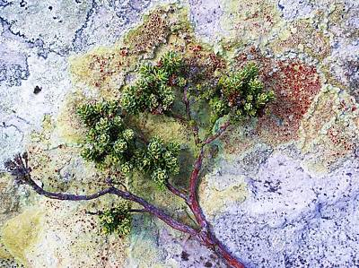 Photograph - Framed By Lichen by Michele Penner
