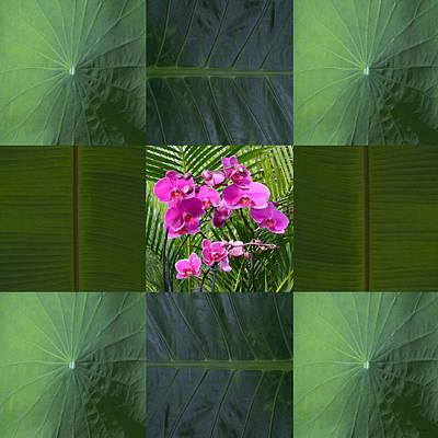 Photograph - Framed Orchids by John Neville Cohen