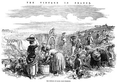 France: Grape Harvest, 1854 Art Print