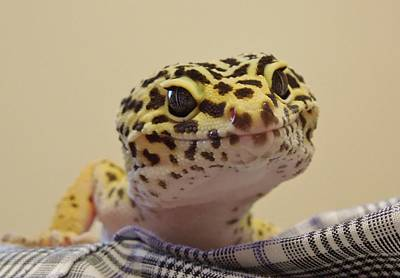 Freckles The Smiling Leopard Gecko Art Print by Chad and Stacey Hall