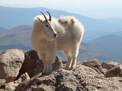 Wall Art - Digital Art - Fred The Mountain Goat by Bill Kennedy