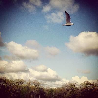 Photograph - Freebird by Lora Mercado