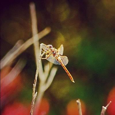 Animals Photograph - Freedom - Beautiful Freedom by Joel Lopez