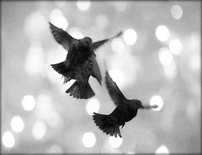 Photograph - Freedom by Marianna Mills