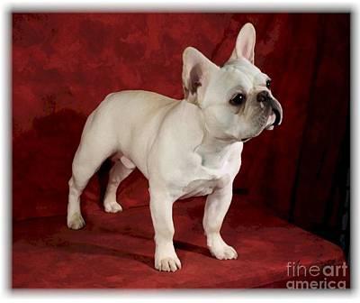 Pup Digital Art - French Bulldog Pup by Maxine Bochnia