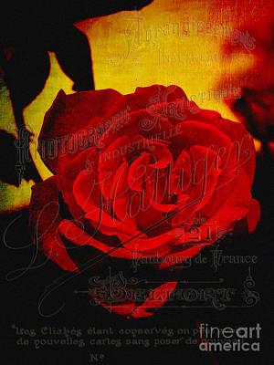 Photograph - French Rose by Karen Lewis