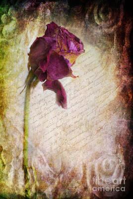 Photograph - French Rose by Yhun Suarez