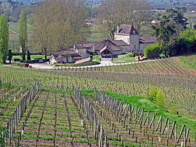 Bellefonte Wall Art - Photograph - French Vineyard In The Spring by Rod Jones
