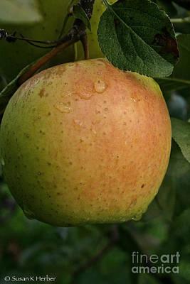 Fresh Apple Art Print by Susan Herber