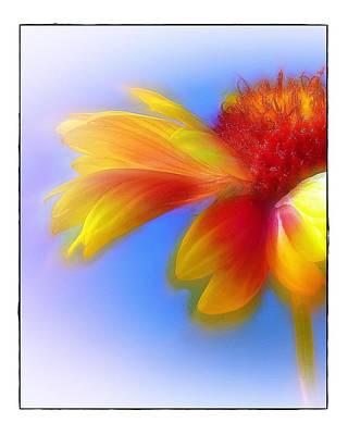 Fresh As A Daisy Art Print by Judi Bagwell