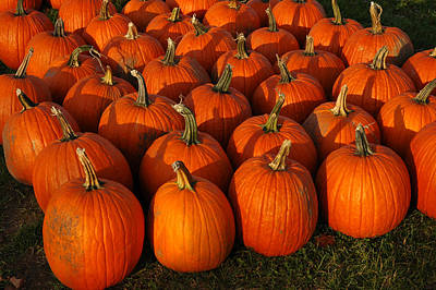 Fresh From The Farm Orange Pumpkins Art Print