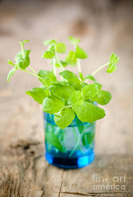 Photograph - Fresh Mint by Kati Molin