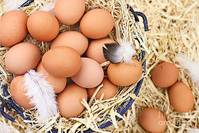 Fresh Organic Farm Eggs Art Print by Stephanie Frey