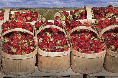 Nirvana - Fresh Picked Strawberries by Randall Nyhof