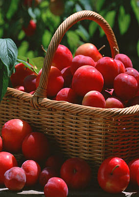 Tropical Photograph - Fresh Red Plums In The Basket by Lanjee Chee