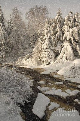 Photograph - Fresh Snow by Alana Ranney