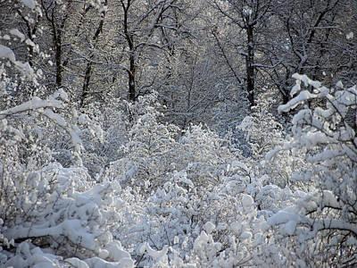 Photograph - Fresh Snows In The Cottonwoods by DeeLon Merritt