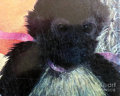 Photograph - Frida's Monkey by Patricia Januszkiewicz